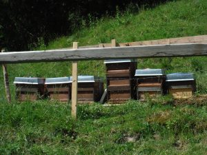 Hives at 1150m in the Allgäu alps