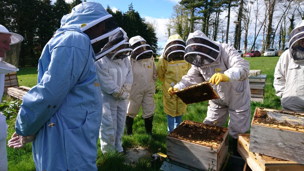 Fife Beekeepers under instruction at the association apiary, Newtonbank, St. Andrews