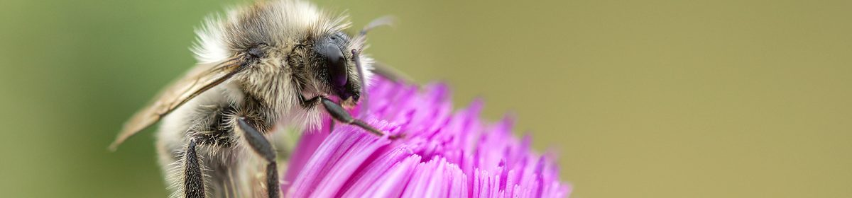 Beekeeping Fife